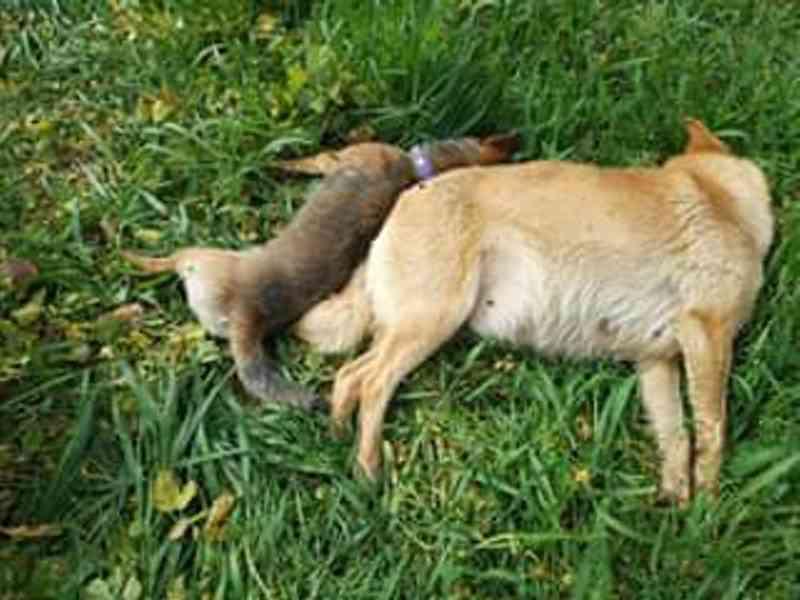 Cinco cães mortos por envenenamento em Oliveira de Azeméis, Portugal