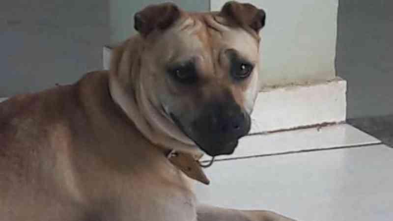 Internauta faz alerta após cão ser envenenado em Cascavel, PR