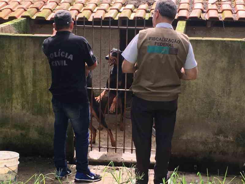 Proprietário de canil clandestino é preso por maus-tratos em Curitiba, PR