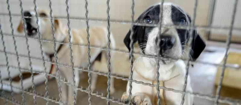 Prefeitura de Maringá (PR) tem mais de 70 cães e gatos para adoção