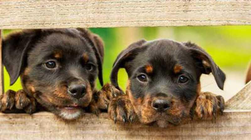 Tamarana (PR) terá castração gratuita de 120 cães e gatos