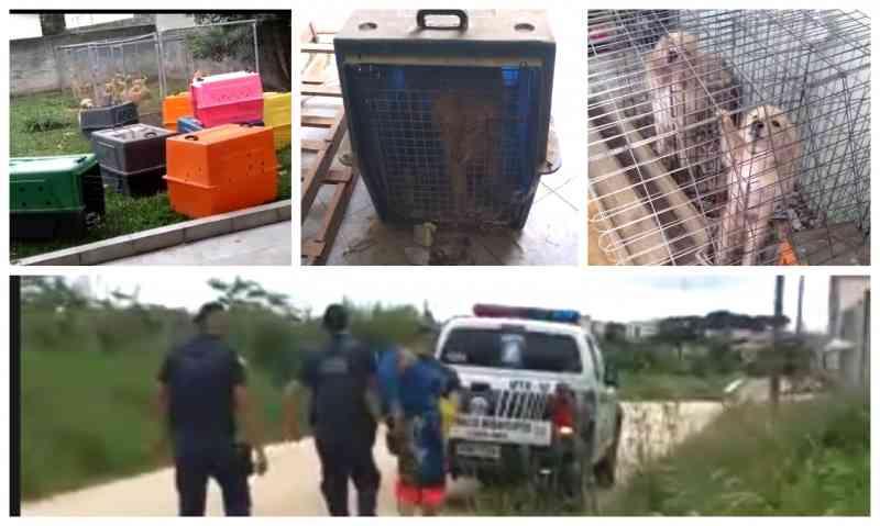 Cães são resgatados e suspeitos por maus-tratos presos no São Gerônimo, em Campo Largo, PR