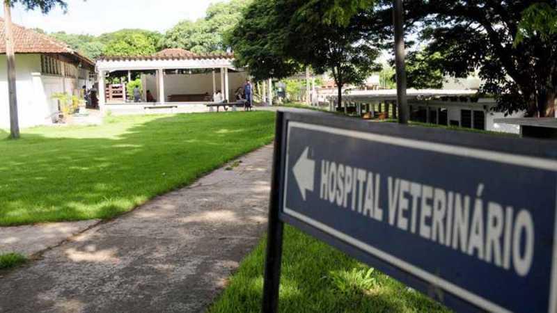 Hospital Veterinário passa a cobrar pelos exames das Ongs