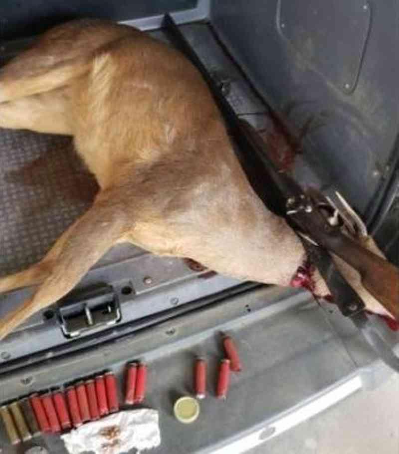 Veado-campeira foi morto com tiro