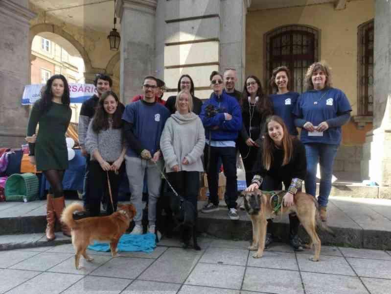 Amigos dos animais pedem carrinha usada como prenda de aniversário em Braga, Portugal