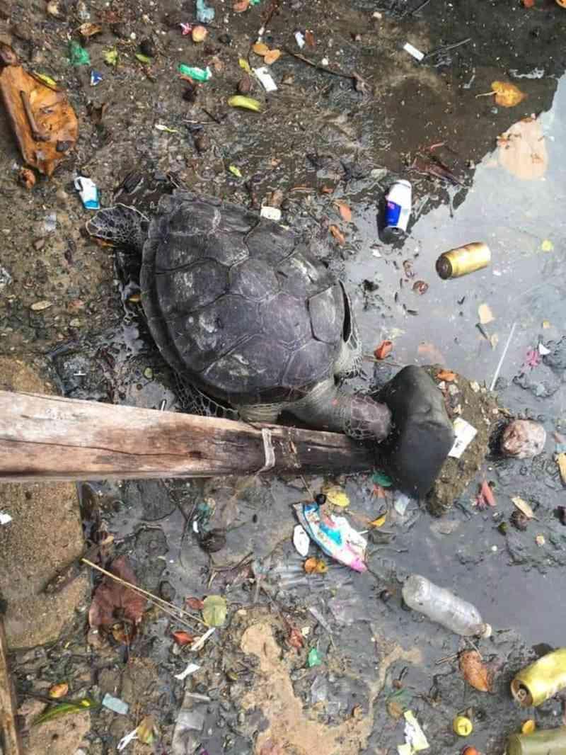 Tartaruga é encontrada morta em meio à poluição no Canal da Ogiva, em Cabo Frio, no RJ