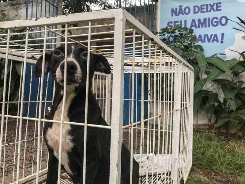 Evento terá 70 vagas para castração de gatos e 20 para cães em Campos, no RJ