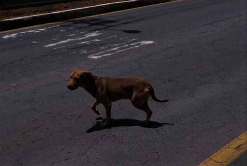 Foto do suposto cão que teria sido jogado do segundo andar de universidade, está nas redes sociais - Reprodução Redes Sociais