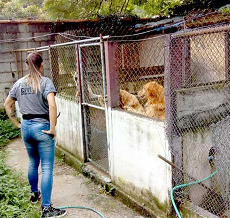Aumentam os casos de maus-tratos a animais em Petrópolis, RJ