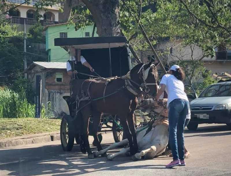 Cavalo escorregou e caiu no bairro Retiro, em Petrópolis, RJ, na tarde desta terça-feira (26). — Foto: Carolina Schmitt/ Arquivo Pessoal