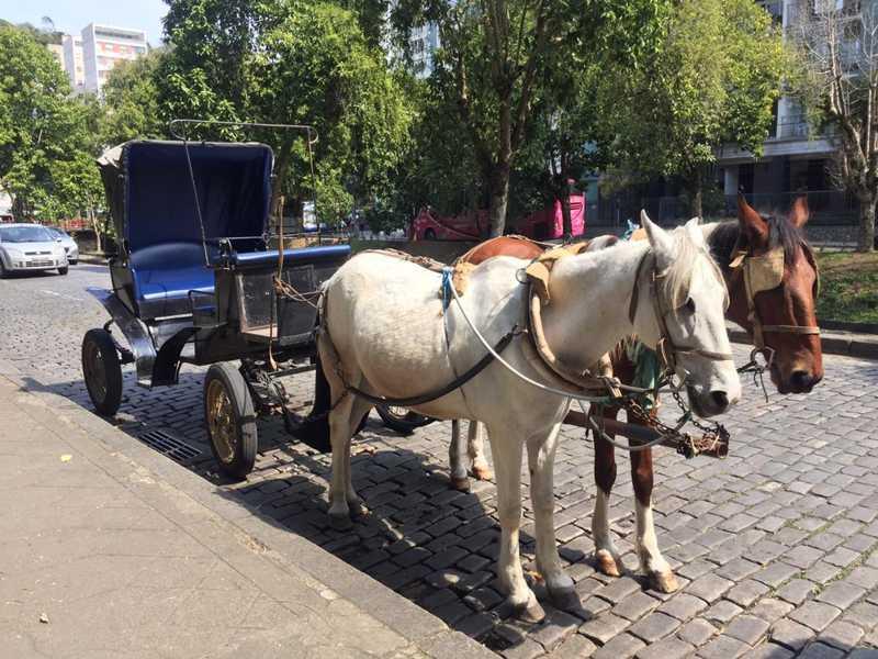 Petrópolis, RJ, decreta fim das atividades com tração animal em charretes