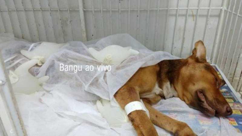 Segundo moradores, PM se irritou porque outro cão latia, disparou em sua direção e acertou Guilherme Foto: Bangu Ao Vivo