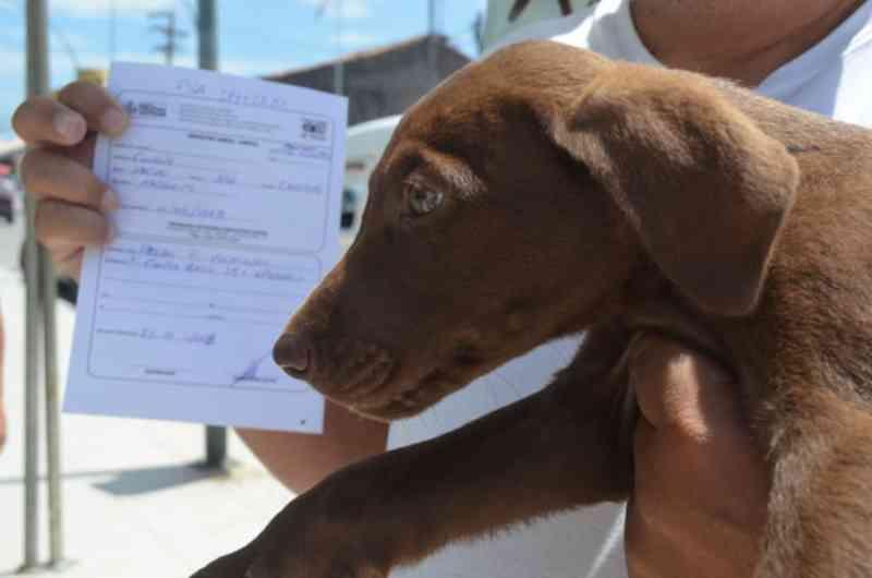 Consultas veterinárias gratuitas beneficiam animais de moradores de baixa renda_Mauricio Rocha