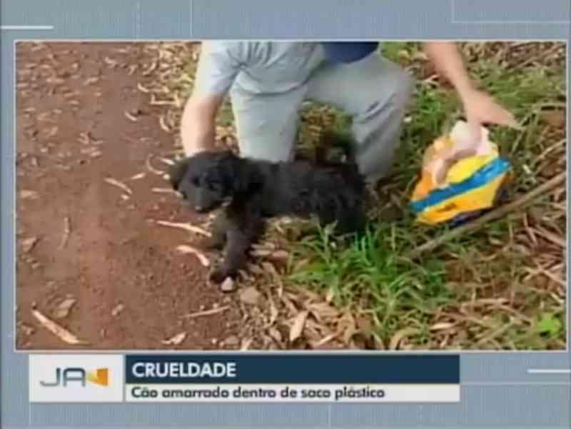 Cachorro é encontrado preso dentro de saco plástico em Abelardo Luz, no Oeste de SC