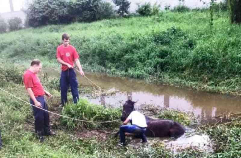 Defesa Animal resgata égua em ribeirão na Itaipava, em Itajaí, SC