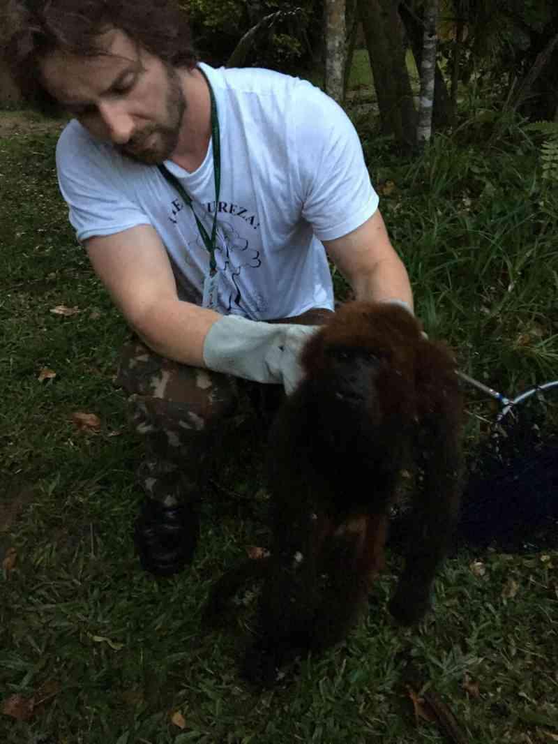 Macaco bugio é resgatado machucado e desnutrido em Jaraguá do Sul, SC