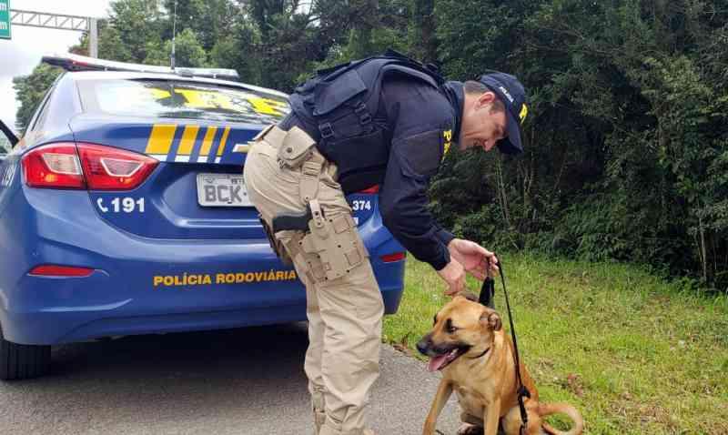 Policiais resgatam cadela abandonada na BR-280 em Mafra, SC