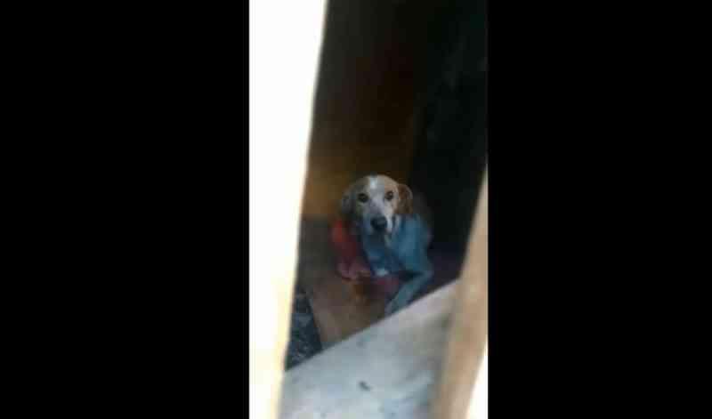 Polícia resgata cachorro em situação de maus-tratos no Norte de SC