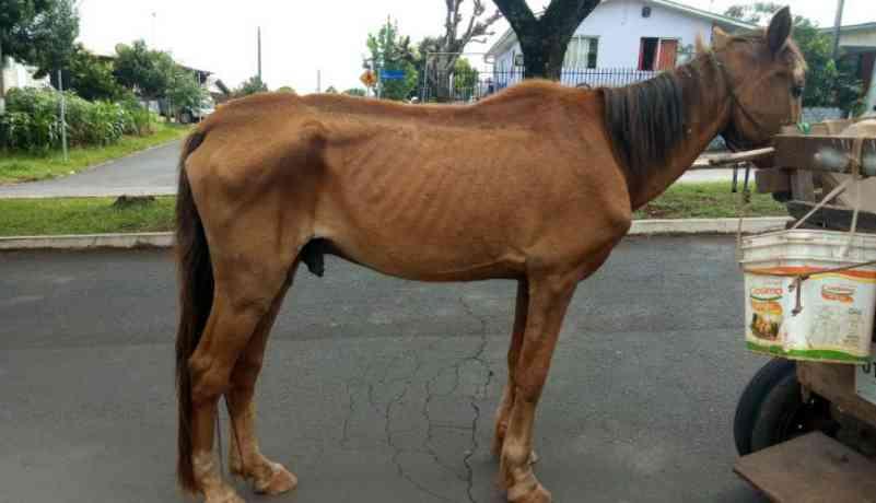 Cavalo morre vítima de maus-tratos, em Xanxerê, SC