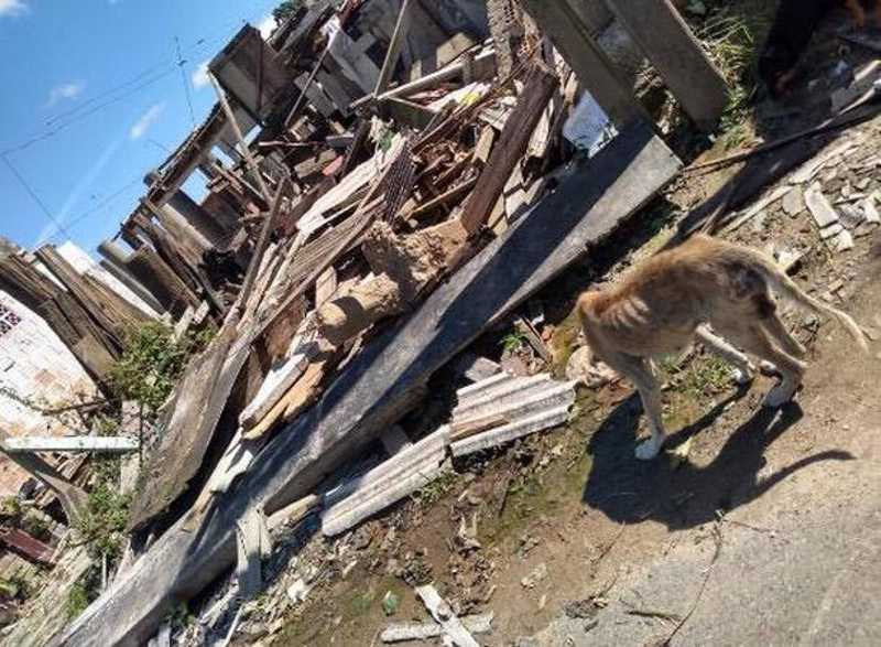 Famílias foram embora e largaram cães abandonados em Itajaí, SC