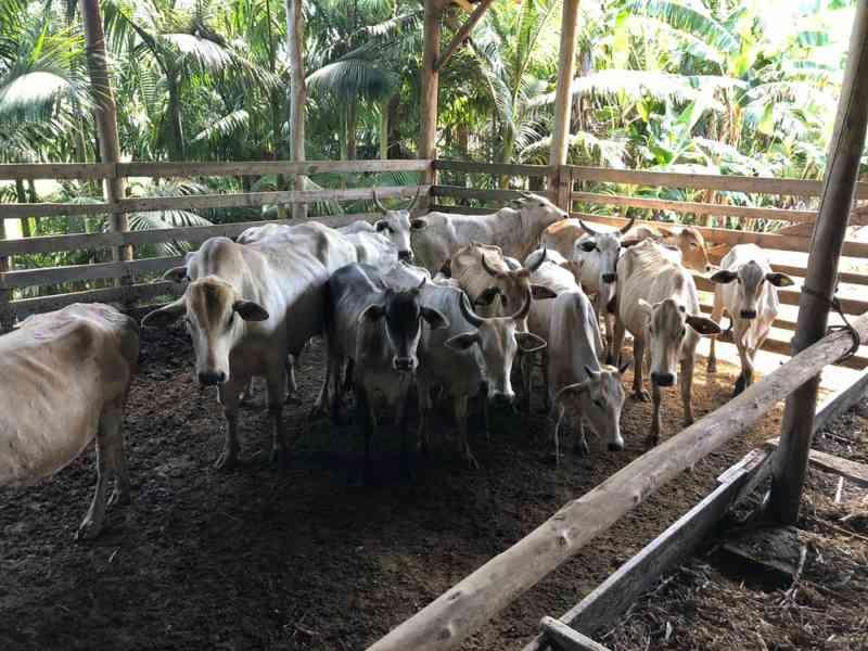 Operação fiscaliza fazenda em SC com suspeita de fornecimento de animais para farra do boi
