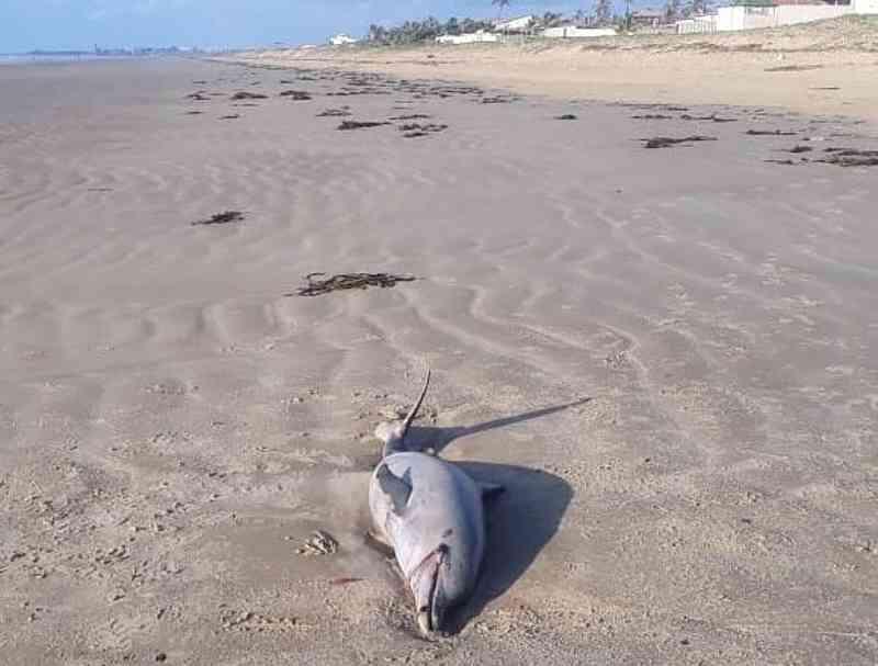 Animais marinhos são encontrados mortos em praias da Grande Aracaju (Foto: Fundação Mamíferos Aquáticos)