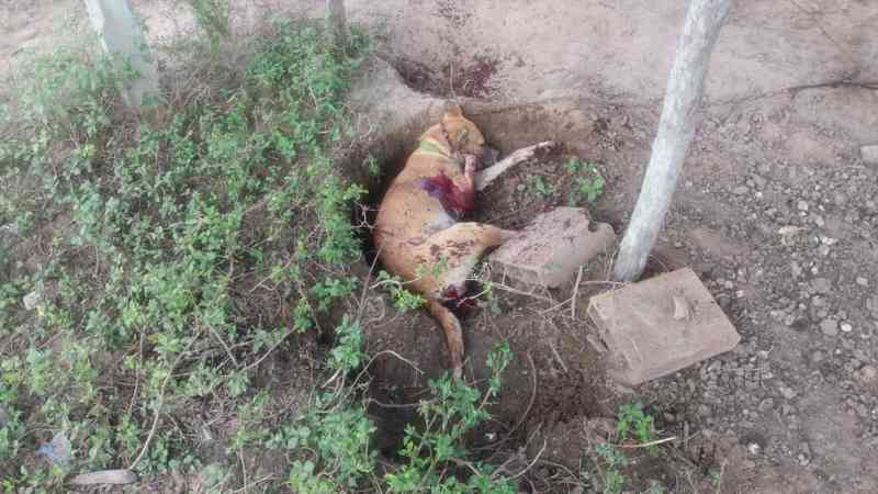 Fazendeiro é acusado de matar dois cães do vizinho a tiros em Sergipe