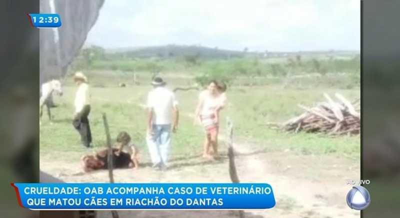 OAB acompanha caso dos cães mortos a tiros em Riachão do Dantas, SE