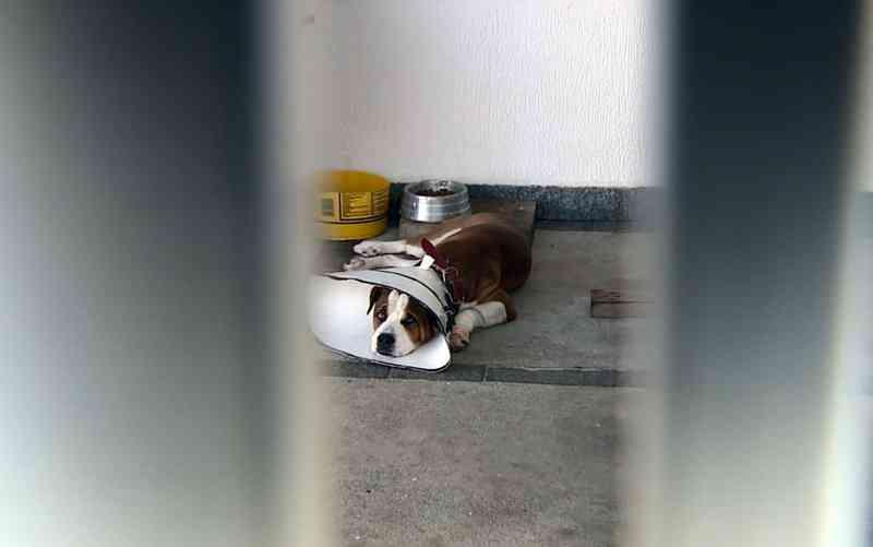 Cachorro retirado do tutor em Jaguariúna — Foto: Reprodução/EPTV