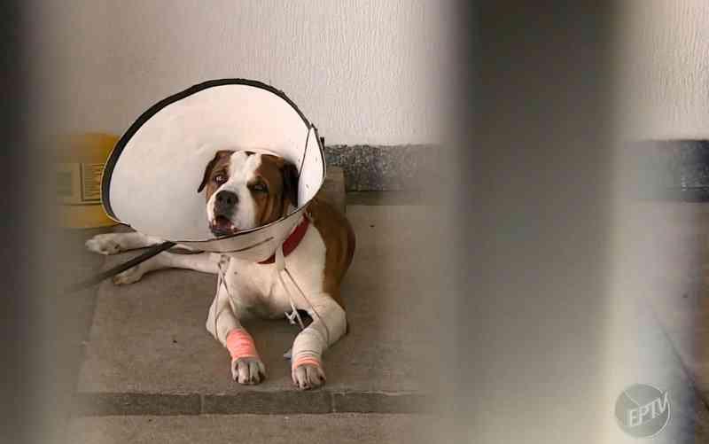 Polícia abre procedimento para investigar tutor que arrastou cachorro em Jaguariúna, SP