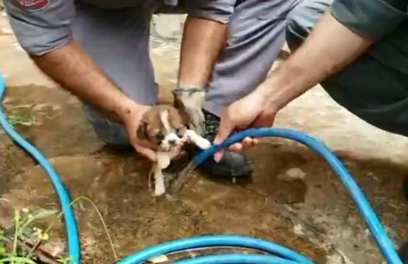 Vídeo mostra resgate de filhote de cachorro entalado em tubulação de água em Marília, SP