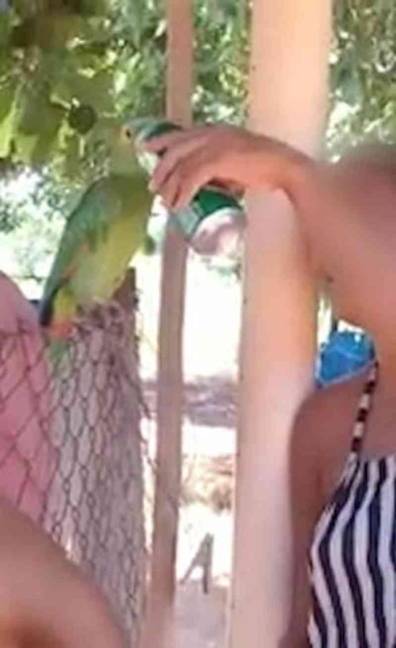 Mulher é multada em R$ 3 mil por dar cerveja para papagaio em SP