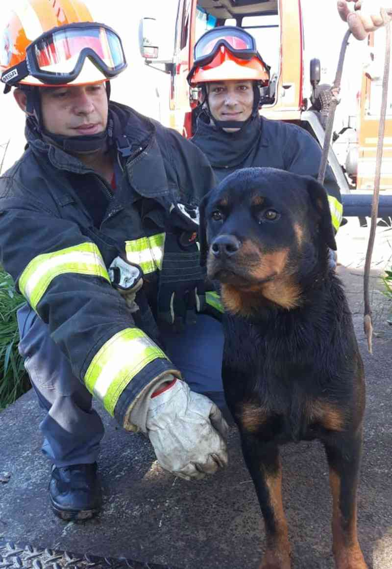 Cadela é resgatada após cair em córrego em Novo Horizonte, SP