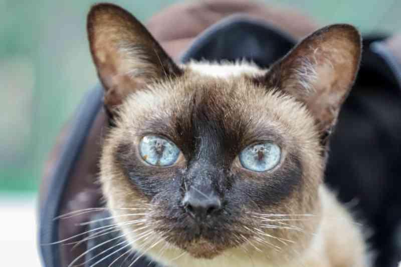 Hospital Veterinário de Osasco (SP) atendeu em um mês cerca de 600 animais