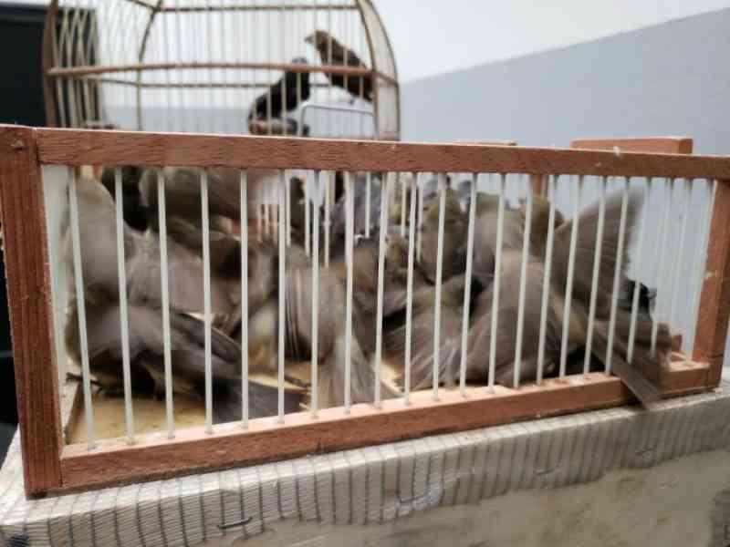 Em Osasco (SP), mais de 200 animais silvestres são resgatados e traficantes recebem multa de R$ 2 milhões