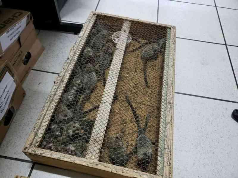 Saguis foram resgatados em uma operação contra o tráfico de animais silvestres Foto: Divulgacão/Projeto Mucky