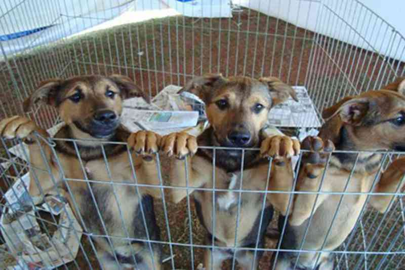 Osasco (SP) realiza Mega Feira de adoção de cães e gatos no próximo sábado
