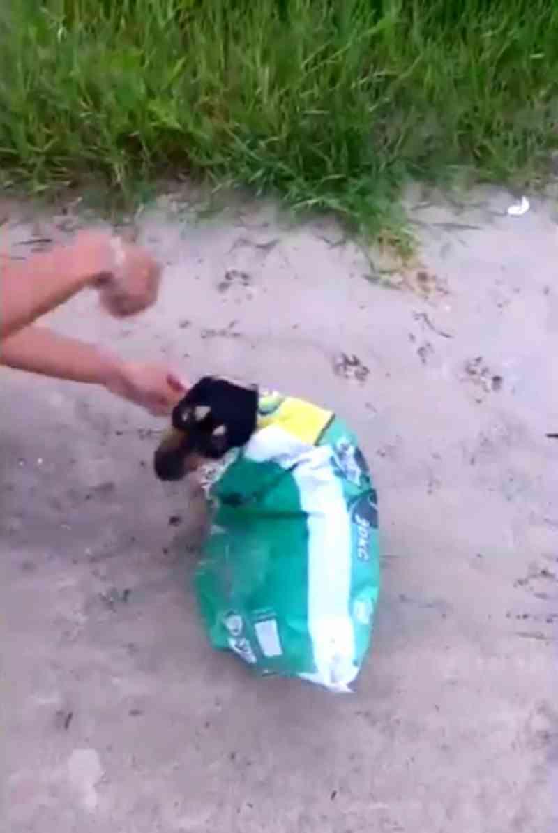 Cão é salvo após ser colocado em saco fechado para morrer em estrada; vídeo