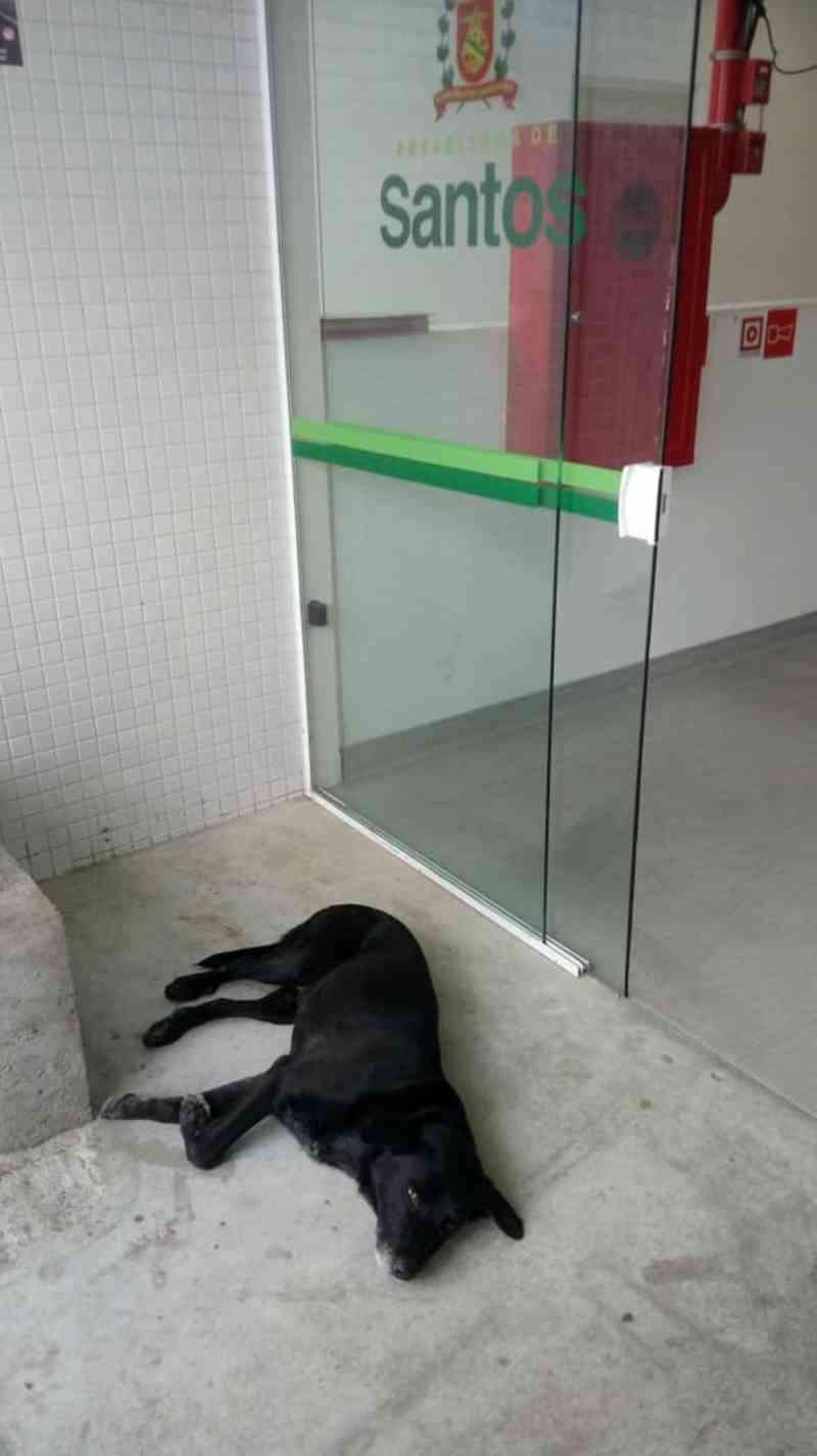 Cachorro é flagrado em frente a UPA de Santos; seu dono morreu na última quarta-feira (13) — Foto: Arquivo Pessoal/Everton Teodoro