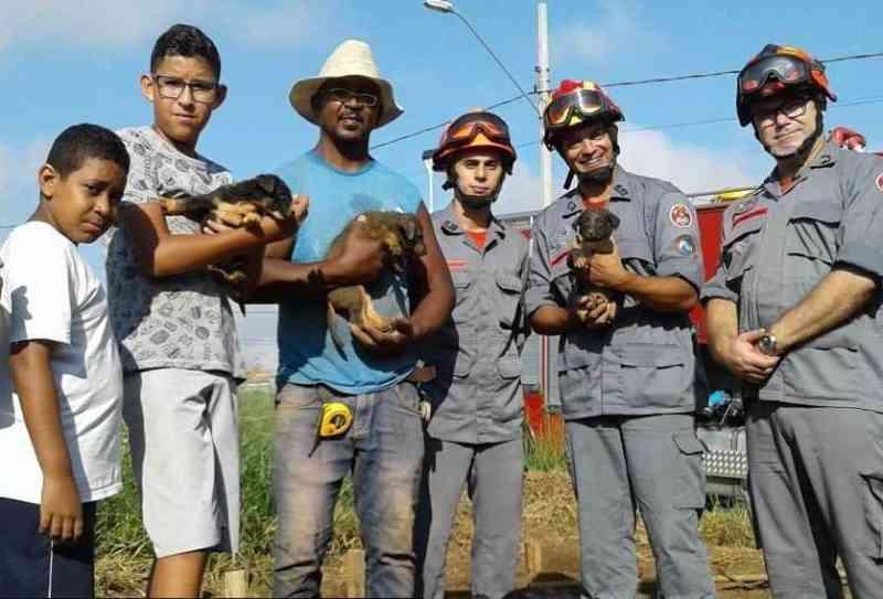 Bombeiros resgatam 3 filhotes de cachorro de um buraco de broca na zona leste de São José (SP); veja vídeo