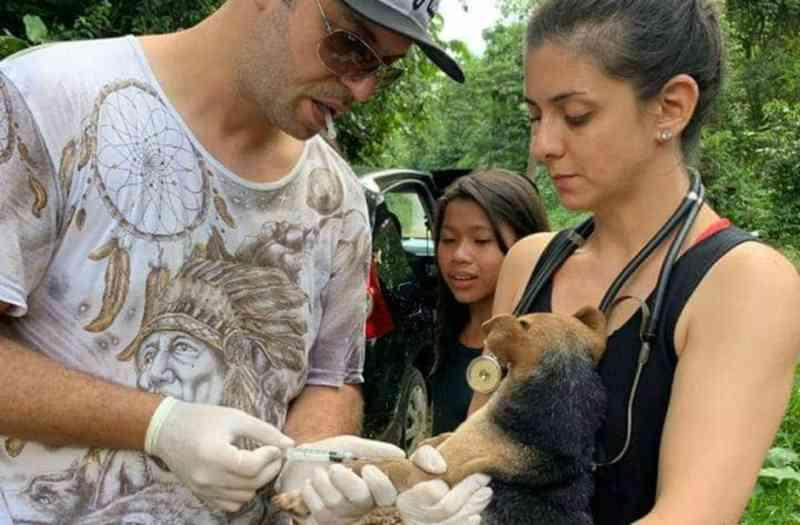Mais de 150 animais são resgatados em aldeia indígena em São Sebastião, SP