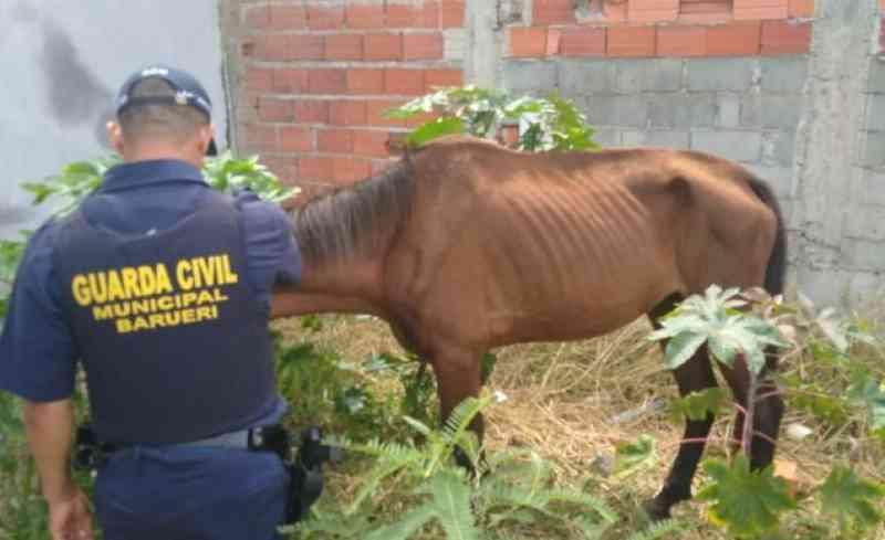 Guarda Ambiental resgata cavalo com sinais de maus-tratos em Barueri, SP