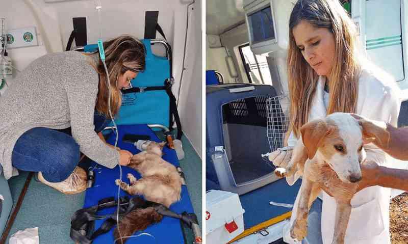 SAMUVET atua nos resgates de cães e gatos doentes, feridos e machucados nas ruas de Bragança Paulista, SP