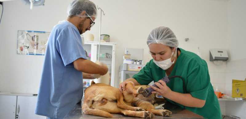 Multirão de castração de cães e gatos é realizado em Cajamar, SP
