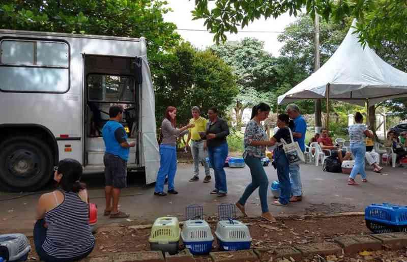 Os animais castrados também receberam um microchip subcutâneo (Foto: Prefeitura de Campinas)
