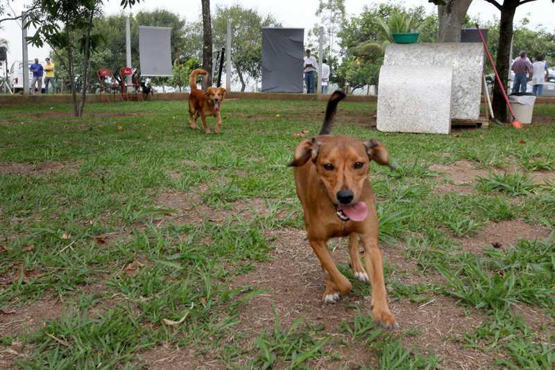 Prefeitura prevê castração de 1 mil cães e gatos na região do Florence — Foto: Fernanda Sunega