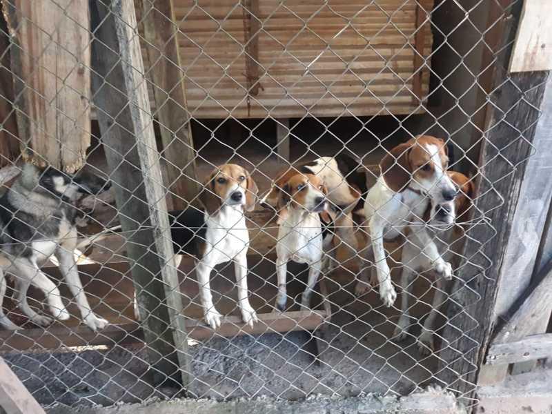 Dez cães foram apreendidos; alguns deles tinham sinais de maus tratos — Foto: Divulgação/ Polícia Ambiental