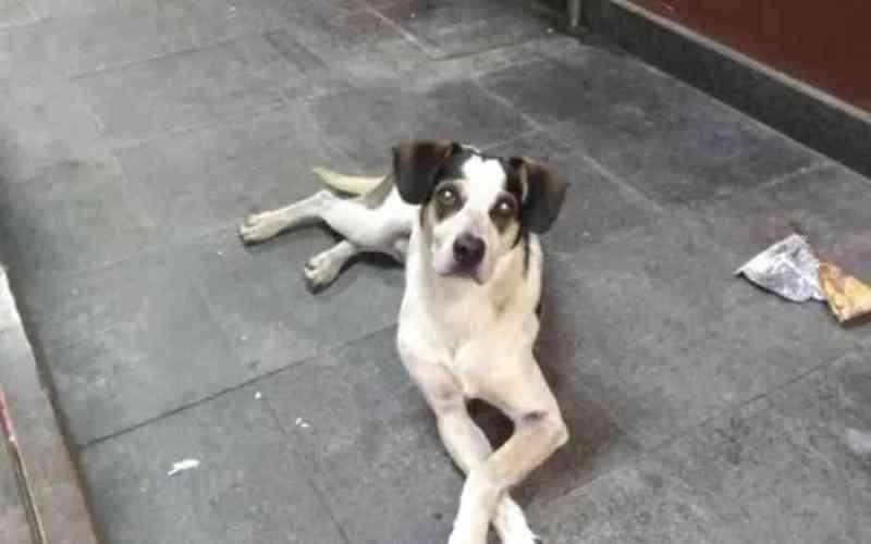 O cachorro que vivia solto na loja do Carrefour teria sido envenenado e espancado até a morte por um segurança Foto: Reprodução/Facebook