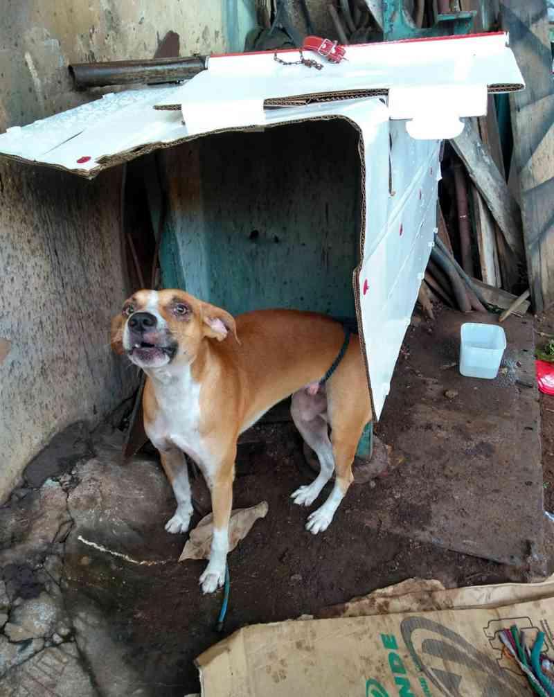 Cão foi resgatado após acionamento da PM e Corpo de Bombeiros — Foto: Polícia Militar/Cedida