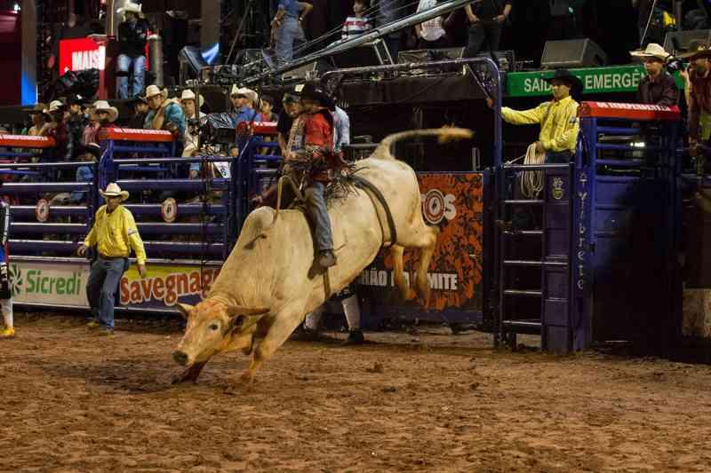 Rodeio de Rio Claro seria seletiva para Barretos/2019 — Foto: Ricardo Nasi/G1